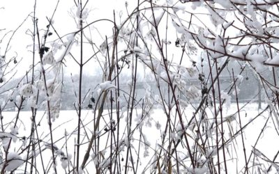 Nahaufnahme, schneebedeckte Randvegetation am Dragoneranger
